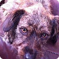 Adopt A Pet :: Liam - Los Angeles, CA