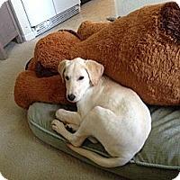 Adopt A Pet :: Zoe - Lewisville, IN