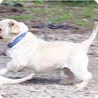 Adopt A Pet :: Peek SUPER SNUGGLER! - Antioch, IL