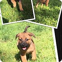 Adopt A Pet :: Fransciso - Scottsdale, AZ