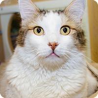 Adopt A Pet :: Davis - Irvine, CA