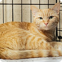 Adopt A Pet :: Lizzy - Union, SC
