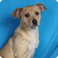 Adopt A Pet :: Maddie - Minneapolis, MN