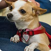 Adopt A Pet :: Chloe - Grass Valley, CA