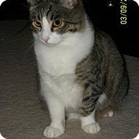 Adopt A Pet :: Beamer - San Jose, CA