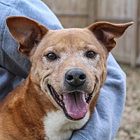 Hound (Unknown Type) Mix Dog for adoption in Jackson, Mississippi - Sparky