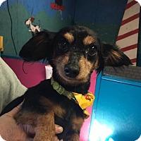 Adopt A Pet :: Baldwyn - York, SC
