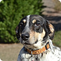 Adopt A Pet :: Elio Roberts - Acworth, GA