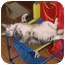 Photo 2 - Domestic Shorthair Cat for adoption in AUSTIN, Texas - Judy