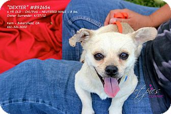 Pug/Chihuahua Mix Dog for adoption in Poway, California - Dexter