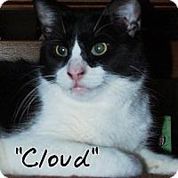 Adopt A Pet :: Cloud - Ocean City, NJ