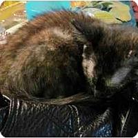 Adopt A Pet :: Josie - Little Rock, AR