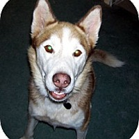 Adopt A Pet :: Ivan *Courtesy Listing* - Santa Fe, NM