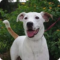 Adopt A Pet :: Spunky - Gainesville, FL