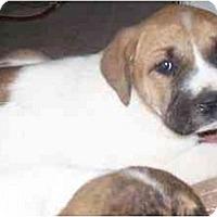 Adopt A Pet :: Suzie - Chandler, IN
