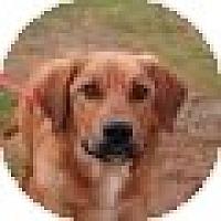 Adopt A Pet :: Griffin - Denver, CO