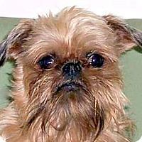 Adopt A Pet :: CHARLEY in Burneyville, OK. - Little Rock, AR
