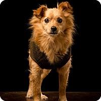 Adopt A Pet :: Sprocket - MEET HIM - Norwalk, CT