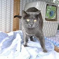 Adopt A Pet :: Mr Whiskers - Sparta, WI