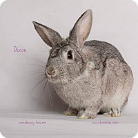 Adopt A Pet :: Dixon - Jurupa Valley, CA