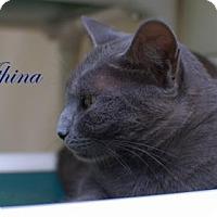 Adopt A Pet :: Athena - Middleburg, FL