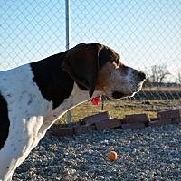 Adopt A Pet :: Edgar Allen - Grinnell, IA