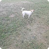 Adopt A Pet :: Eve - Brownsville, TX
