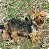 Adopt A Pet :: Paris-Adoption pending - Bridgeton, MO