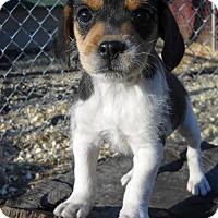Adopt A Pet :: Finch - Danbury, CT
