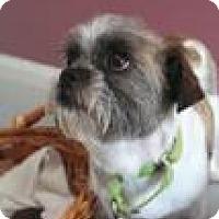 Adopt A Pet :: Akiva - Canyon Country, CA