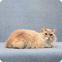Adopt A Pet :: Jasmine (must go with Phaedra) - Cary, NC