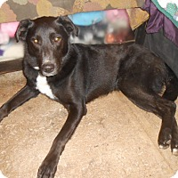 Adopt A Pet :: Finley - North Jackson, OH