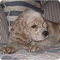 Adopt A Pet :: Dirk - Sugarland, TX