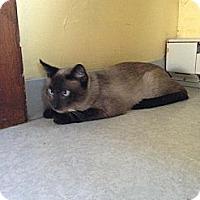 Adopt A Pet :: Studley - Lancaster, MA