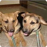 Adopt A Pet :: Sydney - Chicago, IL