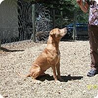 Adopt A Pet :: Kristoffersen - Covelo, CA