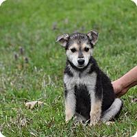 Adopt A Pet :: Paisley - Groton, MA