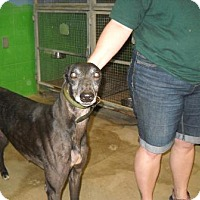 Adopt A Pet :: PG Laker - Knoxville, TN