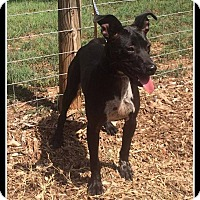 Adopt A Pet :: Sophie - Indian Trail, NC