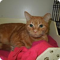 Adopt A Pet :: Olivia - Medina, OH