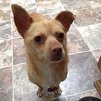 Adopt A Pet :: Higgins - Bonney Lake, WA
