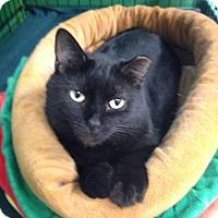 Adopt A Pet :: Magic - Byron Center, MI