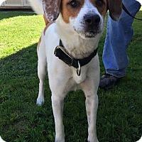 Adopt A Pet :: SHEP - Cadiz, OH