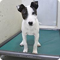 Adopt A Pet :: A28 Lexi - Odessa, TX