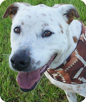 Labrador Retriever Mix Dog for adoption in Friendswood, Texas - Mickey- adopt for $50!