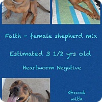 Adopt A Pet :: Faith - Jacksonville, NC