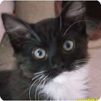 Adopt A Pet :: Johnny - lake elsinore, CA