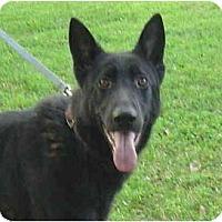 Adopt A Pet :: Luke - Pike Road, AL