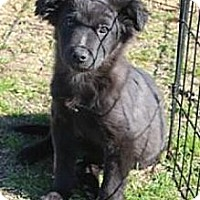Adopt A Pet :: Ace - Crystal Springs, MS