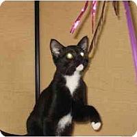 Adopt A Pet :: Beijing - Jenkintown, PA